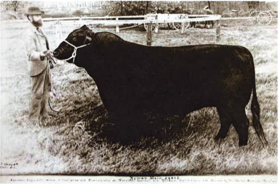 Historic Guelph The Cow V55P55